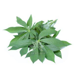 cassava-leaves