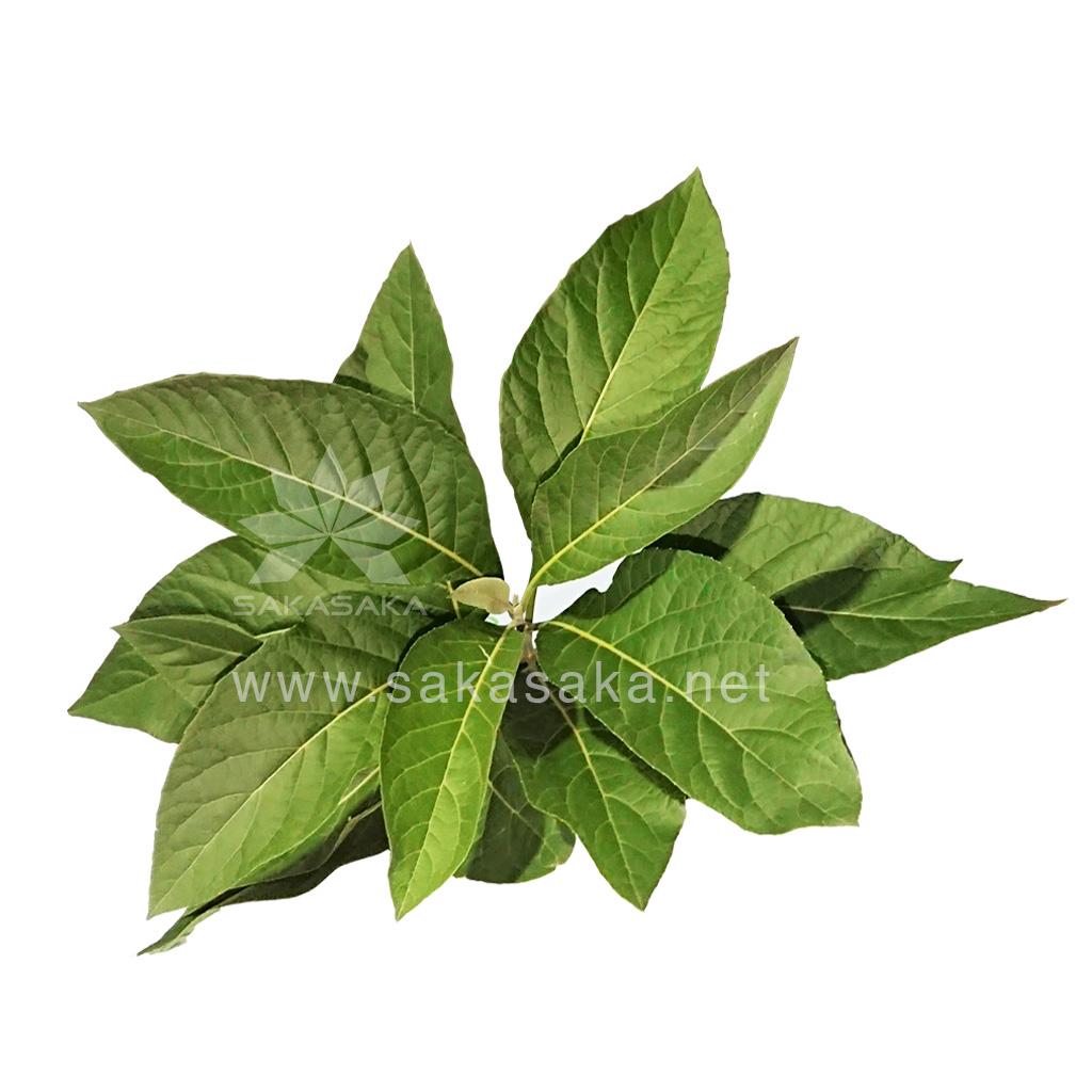 bitter-leaves